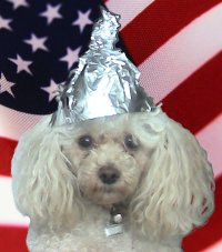 CLICK TO JOIN TINFOIL HAT DOG ON FACEBOOK
